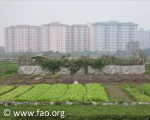 Urban Agriculture and Food Security